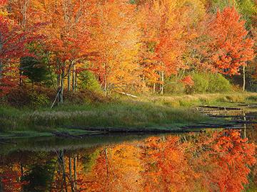 fall-color-walworth